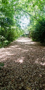 PCH path